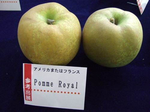 Apple05