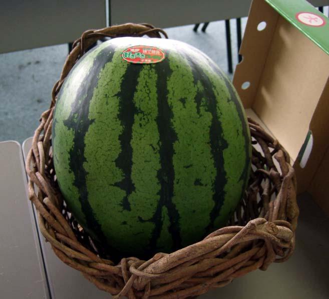 watermelon01.jpg