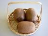 6kiwifruit01