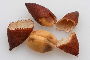 Snakefruit06