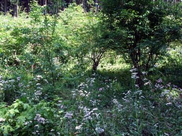 Garden01_2