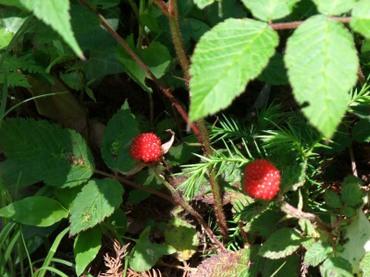 Raspberry01
