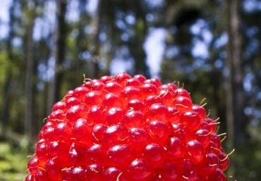 Raspberry02