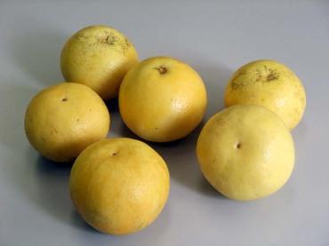 Citrus11