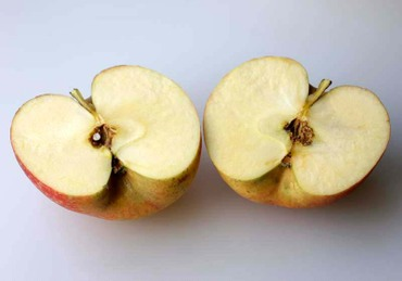 Ogawa_apple04_3