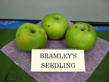 Bramley_imperial01_1