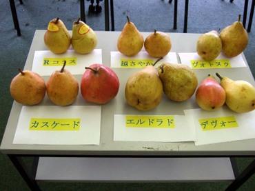 Fruits02