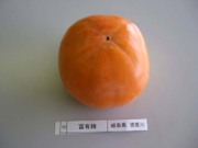 Fuyu_ibigawa02_2