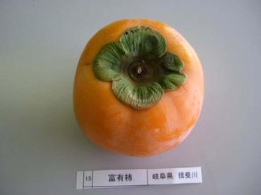 Fuyu_ibigawa03
