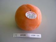 Fuyu_isawa02