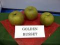 Golden_russet_1
