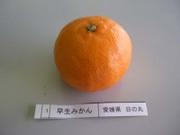Mikan_hinomaru01_2