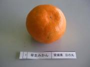 Mikan_hinomaru02