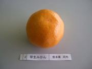 Mikan_kaeati02