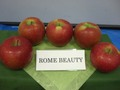 Roma_brauty_1