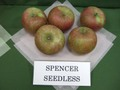 Spencerseedless01__1_2