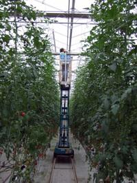 Tomato_field02_2