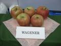 Wagneer_1