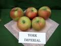 York_imperial01_1