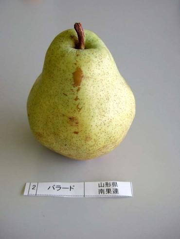 Pear_ballad01