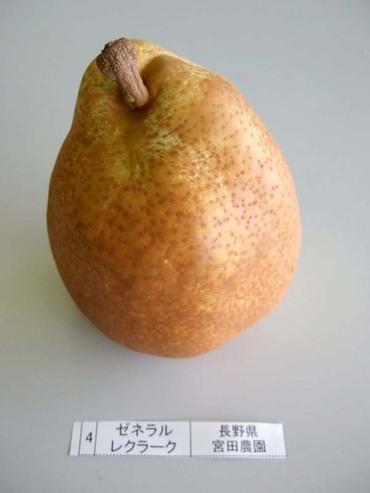 Pear_gleklark01