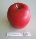 Apple_ssantaro01_2