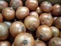 Onion1_01