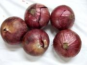 Onion4_01