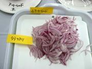 Onion4_03