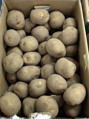 Potato03toya