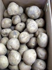 Potato04kitaakari