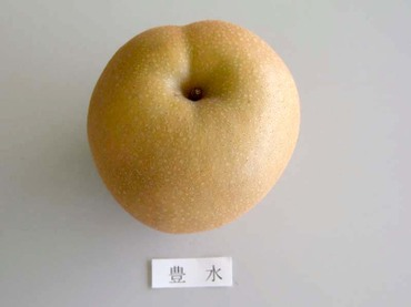 Nasihosui1