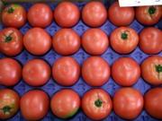 Tomato0201