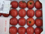 Tomato0501