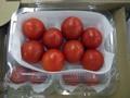 Tomato_fru01