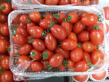 Tomato_suishu