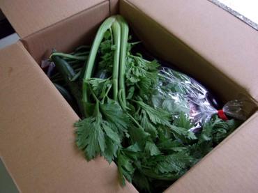 Vege_box