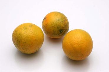 Kataura_orange01