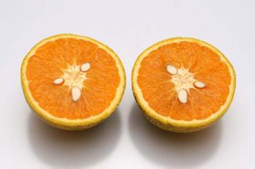 Kataura_orange02