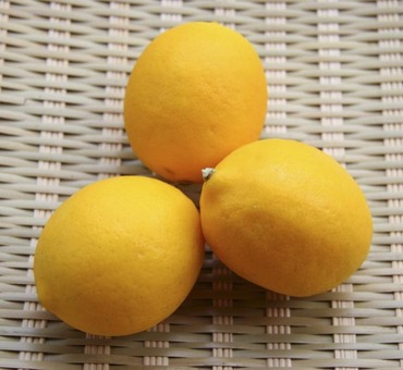 Meyer_lemon1