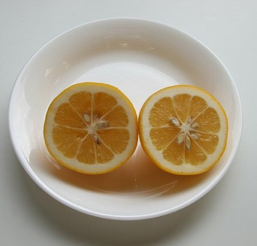 Meyer_lemon2