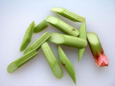 Rhubarb02