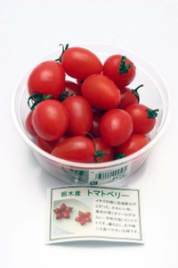 Tomatoberry01_3