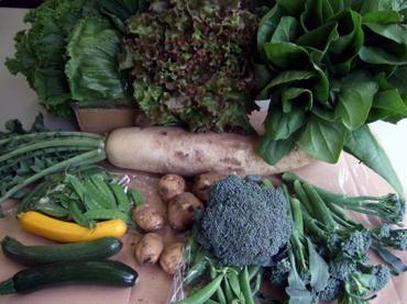 10_vegetable