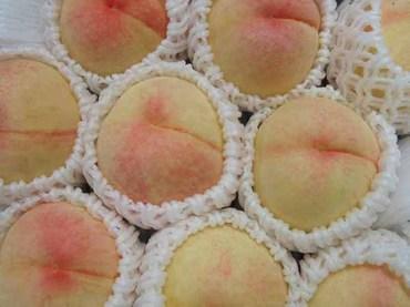 Peach_04