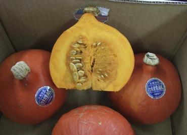 Pumpkinutugi1