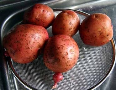 Yoko_potato