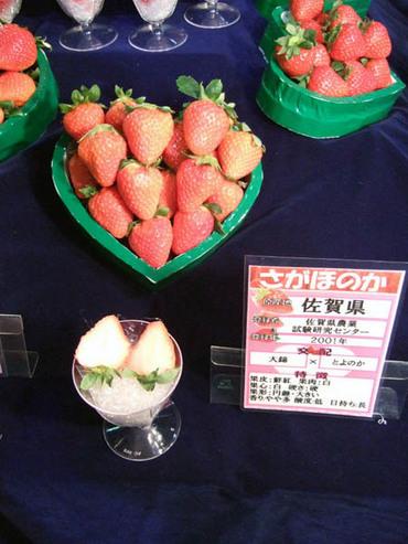 Sagahonoka_2