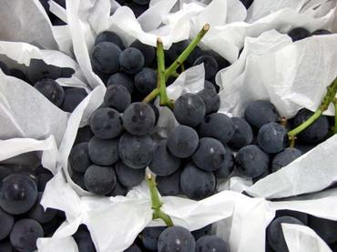 Grape1