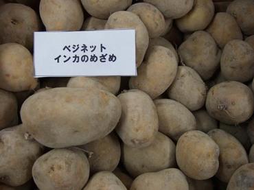 Potato_inka